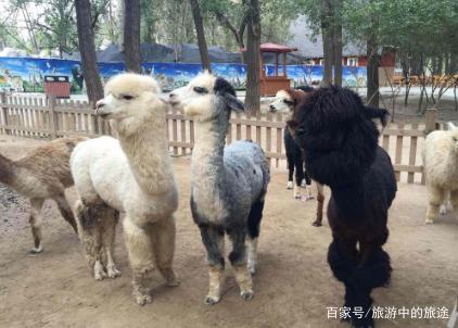 """2017年3月19日上午,有网友爆料称,在北京野生动物园自驾区拍到""""游客"""