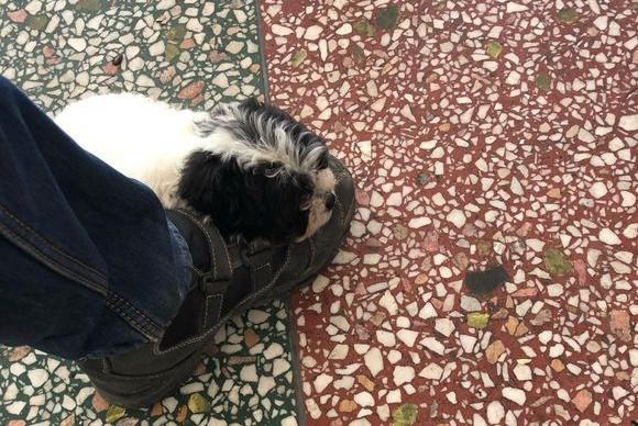 小流浪狗饿得眼馋直抱大腿,男子心软带回家,悉心照料后萌翻众人