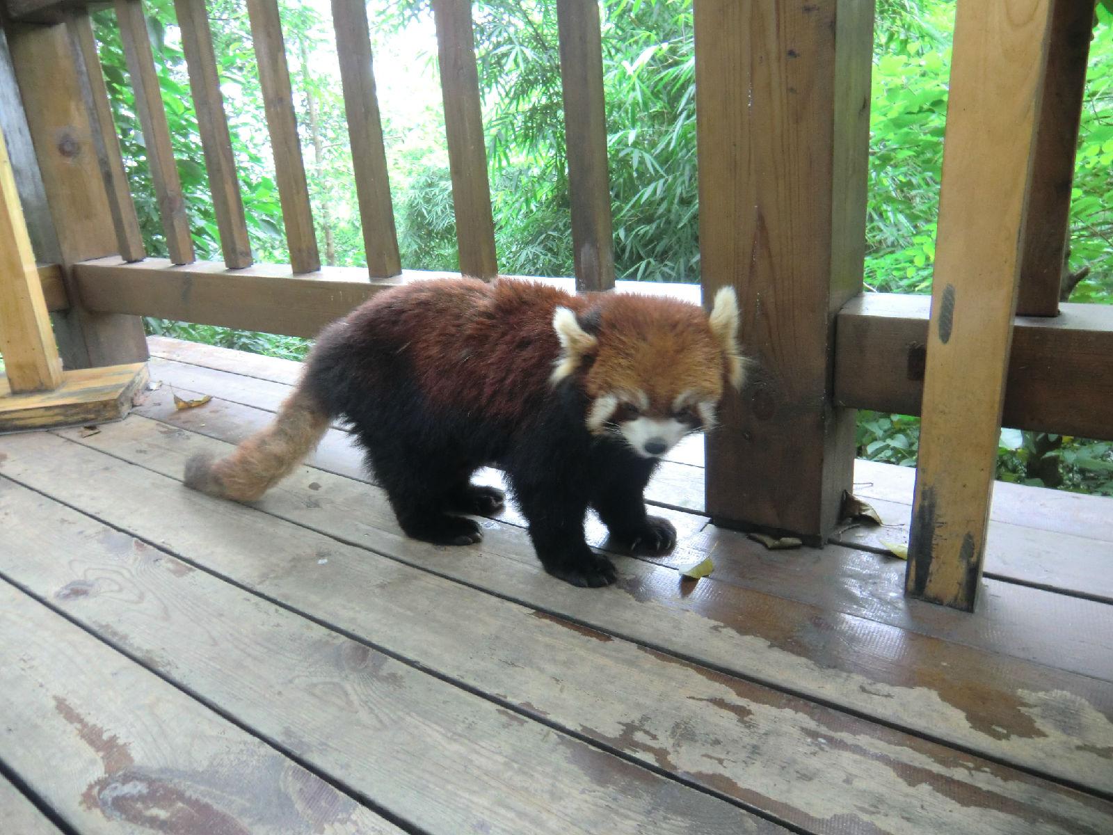 除了上海动物园,贵阳花果园湿地生态公园,环境舒适的