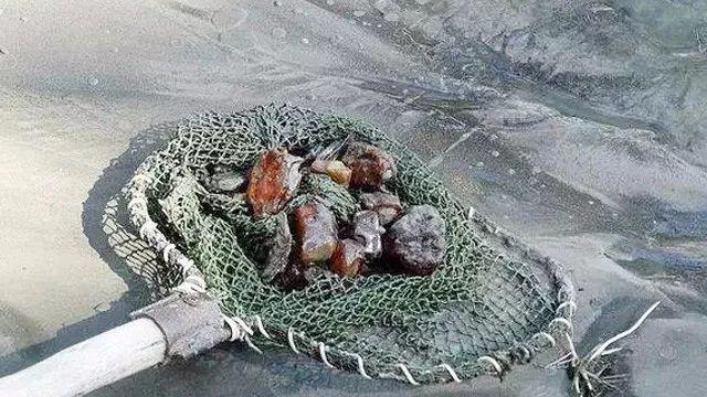 鱼网打捞上的琥珀