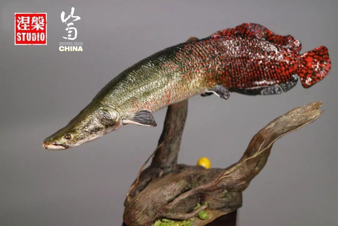 """世界最大淡水鱼""""巨骨舌鱼"""",现在也能成为你桌上的收藏品了"""