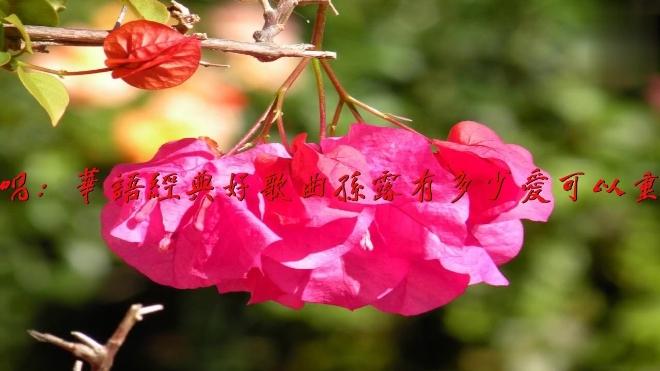 学唱:华语经典好歌曲孙露有多少爱可以重来