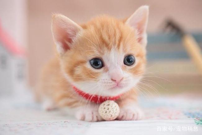 为什么猫咪会拿屁股对着你?原因有5个,不只是巧合!