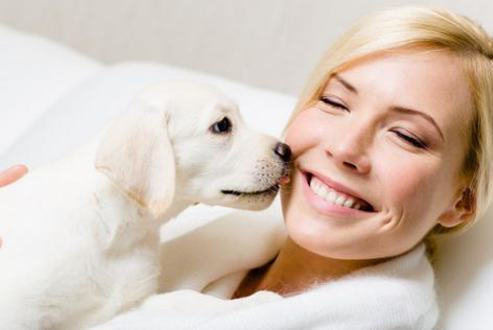 狗狗做这些动作都是爱主人的表现,千万不要寒了它们的心!
