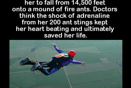 她降落伞坏了,从4000米高空坠落:却意外被25万只小生灵拯救
