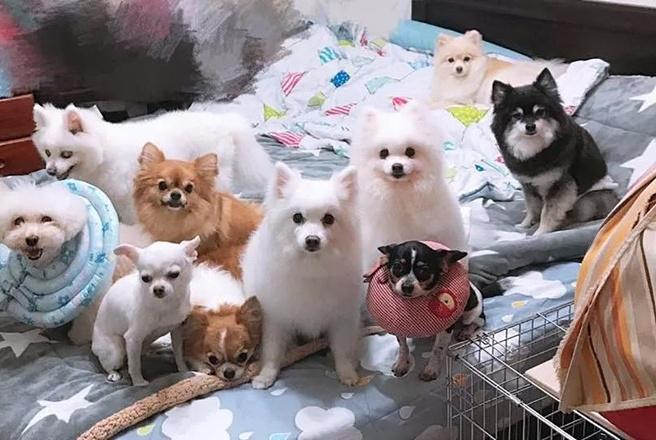 家中起火9只狗狗被呛身亡,主人看到床头的插座泣不成声……