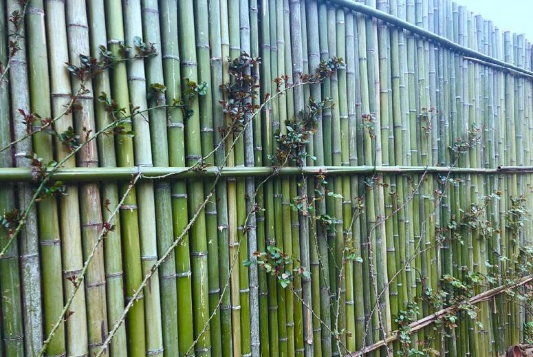 李子柒穿花棉裤做月季墙!用了5吨竹子,网友:地上的柚子咋回事