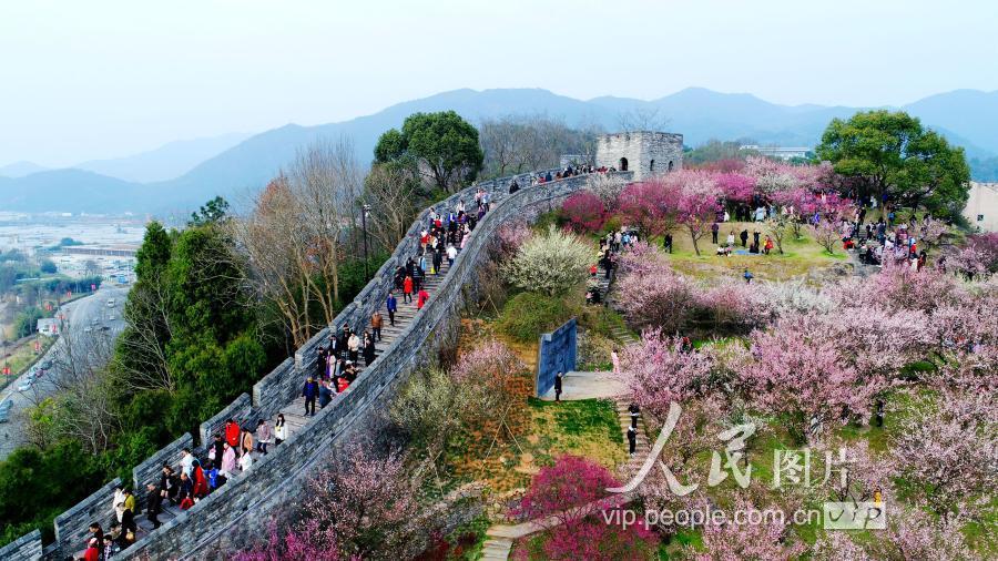 2019年2月5日,浙江臨海長城梅花盛開,風景如畫,吸引了許多游客前來
