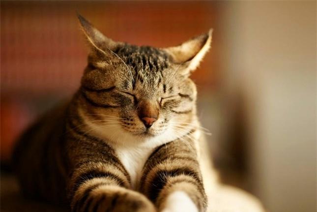再高冷的猫咪睡觉时也会粘人,可能就是这四个原因