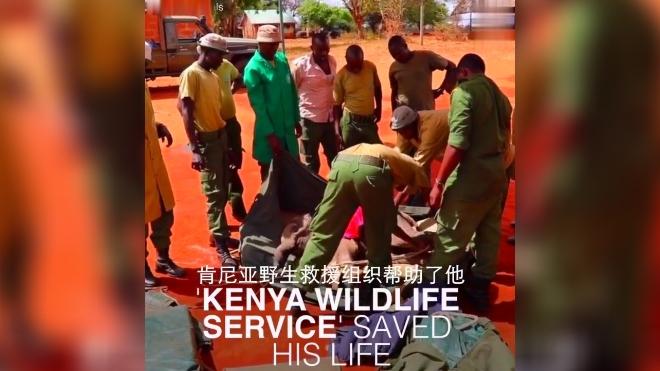 野生动物救援队救助了一只孤身小象