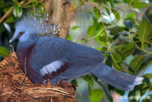 世界上最漂亮的鸟排名,世界上最漂亮的十种鸟你见过几种!