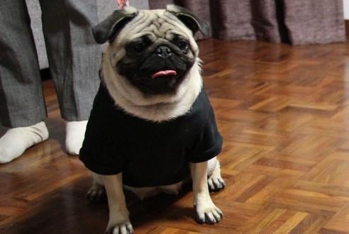 网评五大最容易养的狗狗,快来看看你家的狗子有没有上榜吧!