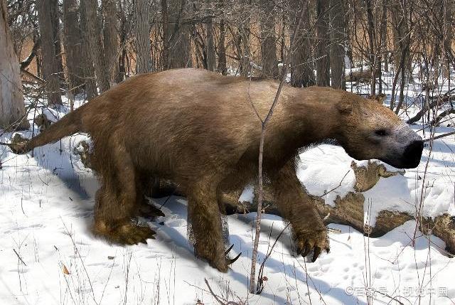 地球史上最大的地懒:行动缓慢重达5吨,剑齿虎见了绕道走