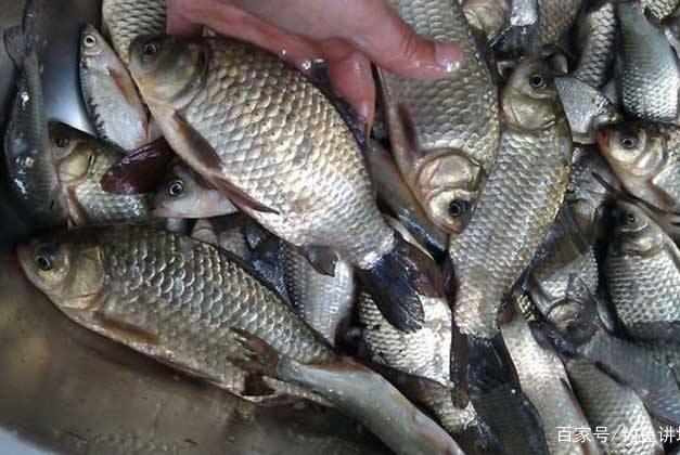 """春季钓鱼,万不可直接开钓,学会这三条""""妙计"""",鱼护爆满很简单"""