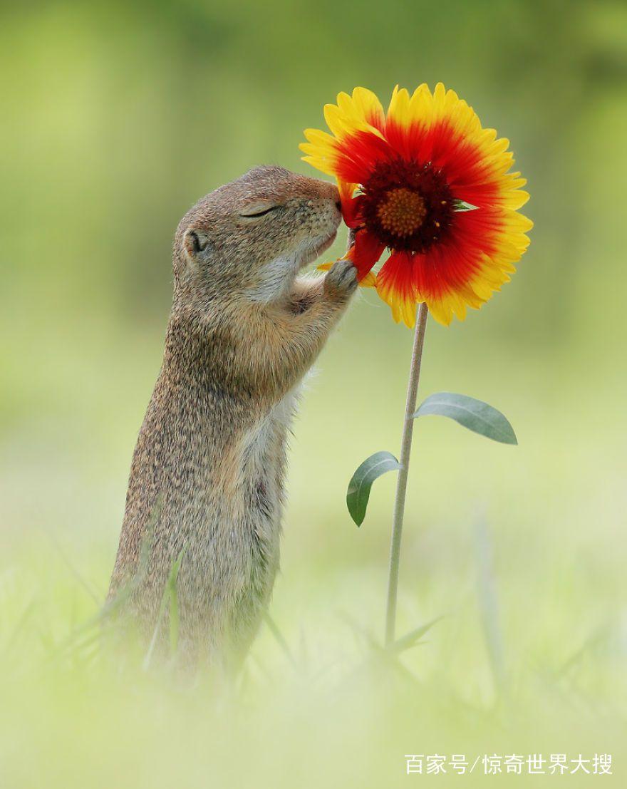 大自然充满了可爱的小动物,尤其是蹦蹦跳跳的松鼠更是吸粉无数,来自