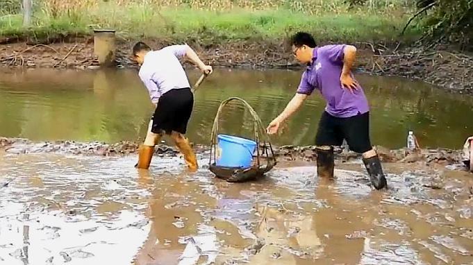 农村清理鱼塘捉鱼,农民在及腰淤泥中抓捕大黑鱼,鱼货惊喜不断!