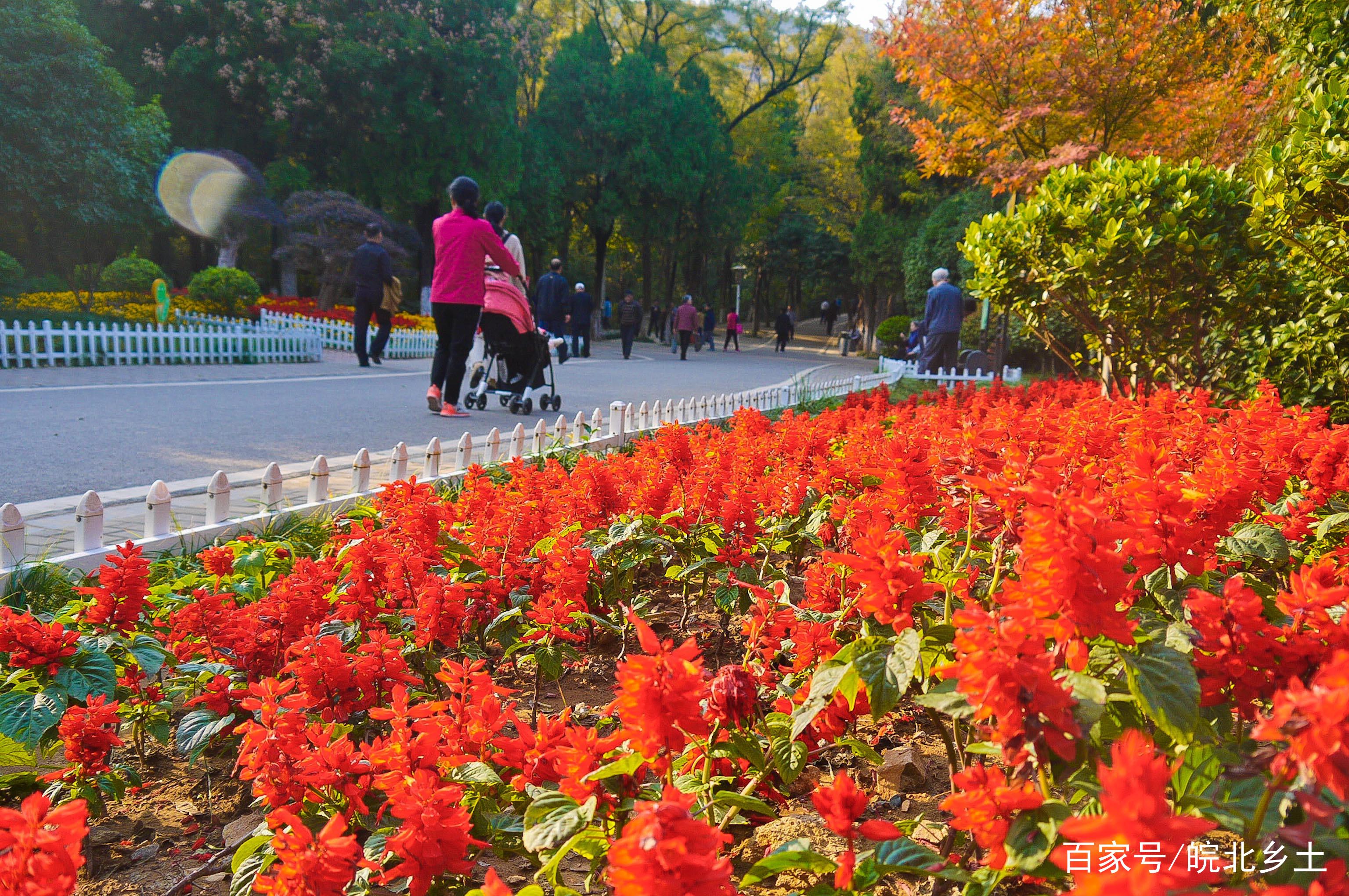 相山脚下是相山公园,鲜花盛开风景如画,是市民休闲的好去处.
