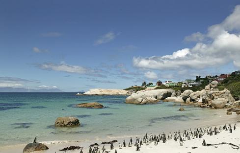 企鹅海滩位于南非开普敦至好望角的路上,一个安静的小镇—西蒙镇,是