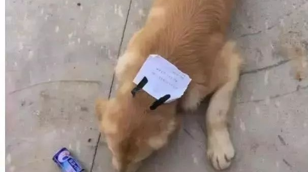 让狗狗呆在这4个地方十分危险!原来许多铲屎官都犯过错…