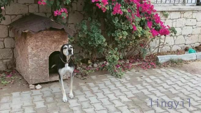 土耳其究竟有多浪漫?看看那里的猫狗你就知道!