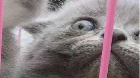 笼子里关着一群小奶猫,其中一只凶噗噗的,把另一只都吓懵了!