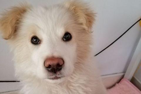 狗狗被弃流浪街头无人管,独自黯然神伤,网友:它值得被爱!