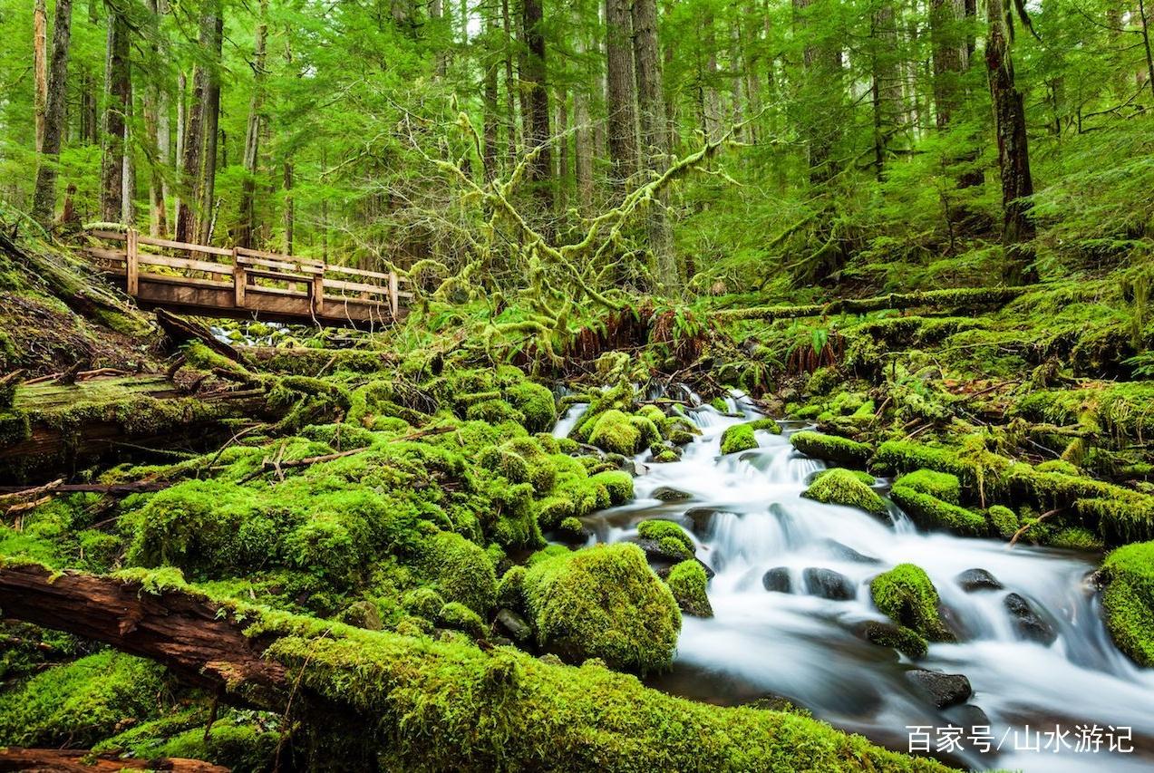 2个最适合在森林中,进行漫长的春季旅行的美国国家公园