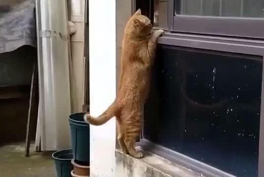 猫站立在窗户上,男子感到好奇,接着一幕让他笑喷,网友:偷情猫