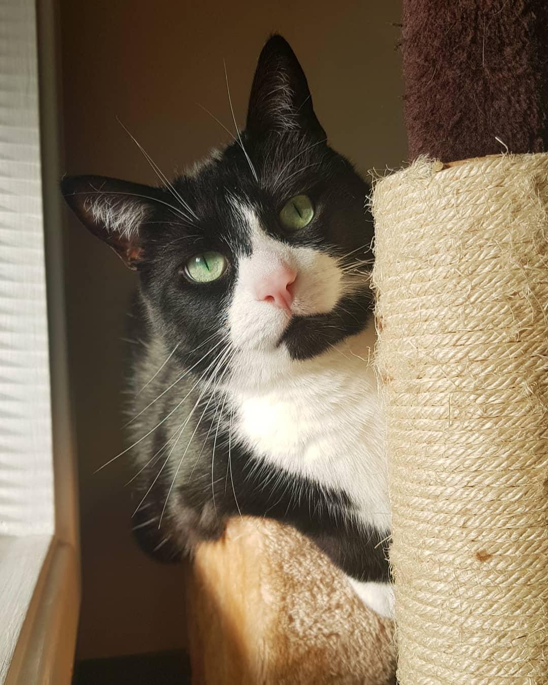 不少铲屎官因为猫咪抓挠家具感到头疼,做到这三点可以