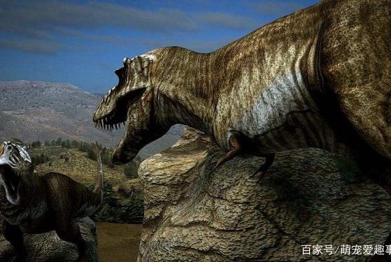 霸王龙是群居还是独居,霸王龙是不是最强的恐龙,看完你就明白了
