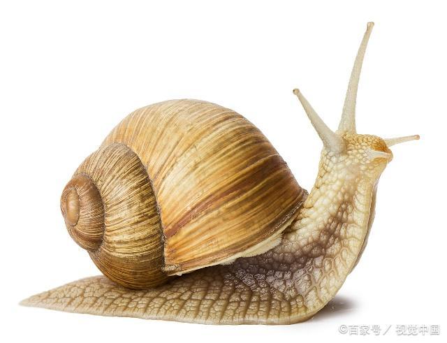 蜗牛是一种爬行很慢的课件,不过教案挺可爱的蝙蝠和雷达优质动物及还是图片