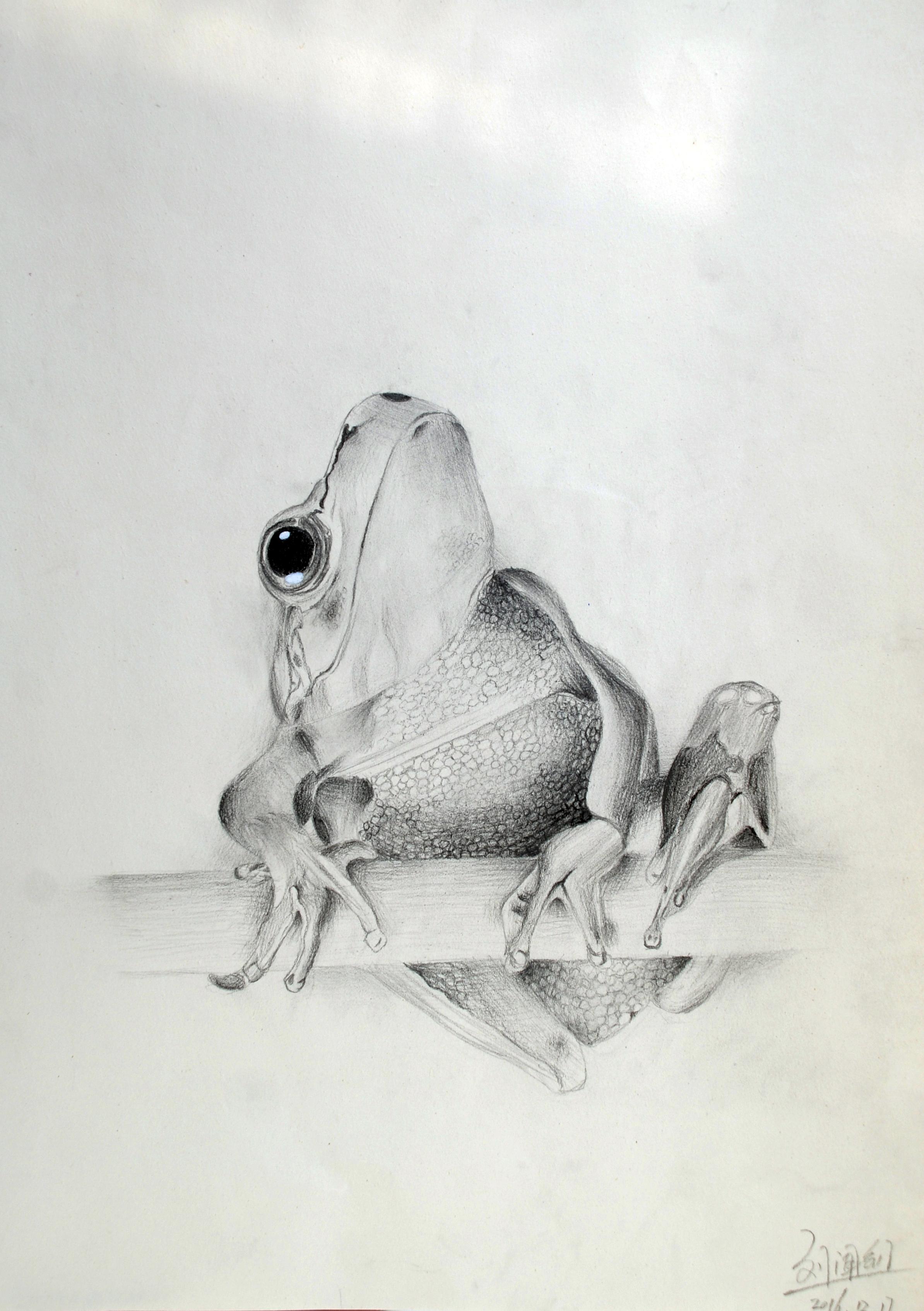 高青国美艺术学校—动物素描学生作品