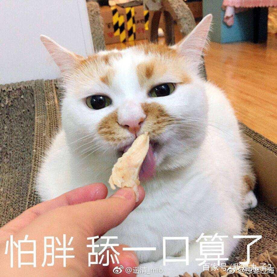 猫表情原创图集图片