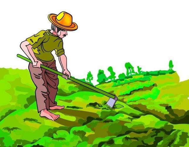 执着的农民