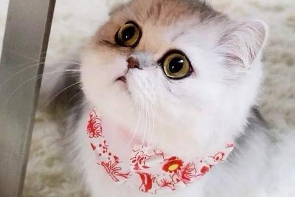 美貌在线的猫咪到底多可怕?铲屎官自重系列:老夫的那颗少女心呐