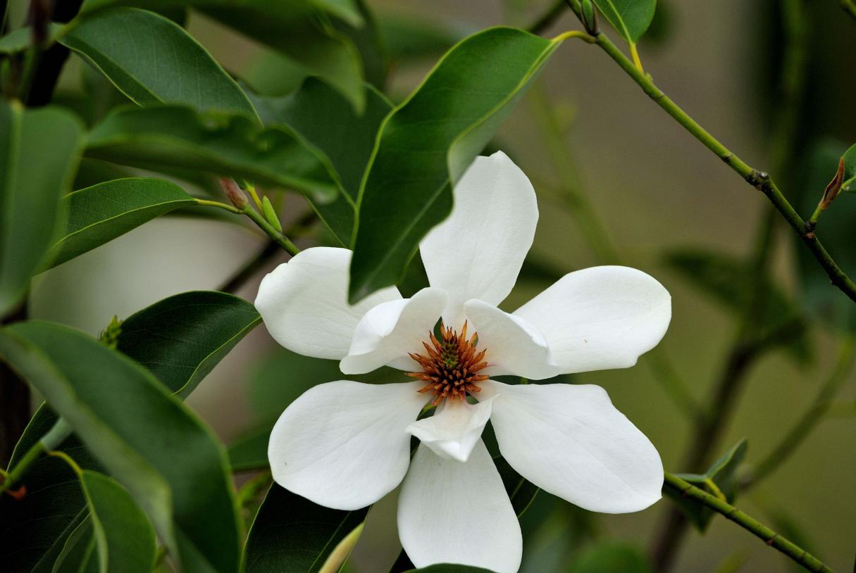 """春在杭州,三月""""人间天堂""""就藏在西湖边,很多人还不知道!"""