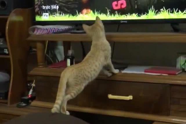 男子看球赛时去了趟厕所,返回卧室后看到这幕,猫:你会不会踢球