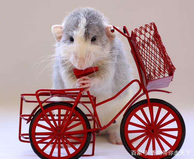 动物穿西装社会图片