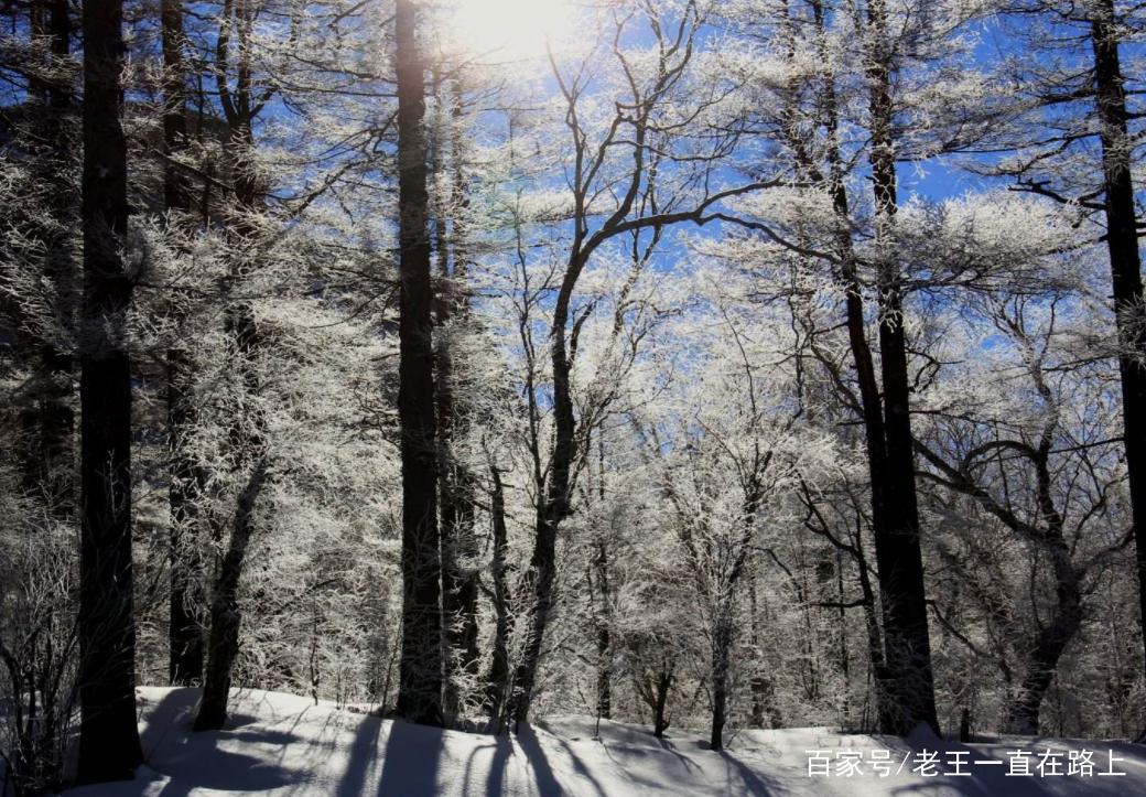 """地下森林又称""""火山口原始森林"""",和镜泊湖区1200多平方公里的面积共同图片"""
