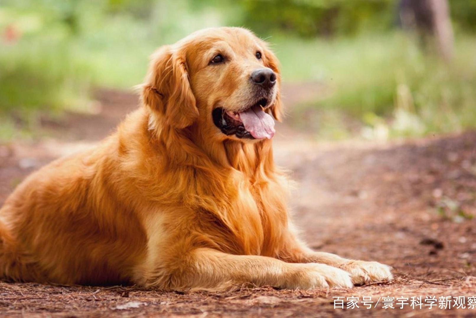 死了都要爱,史前人类对狗狗的疼爱不输现代人,连入葬都带上它们