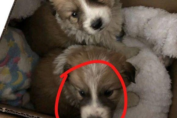 爱心接力收养了只流浪狗,不曾想两个月后判若两狗,网友:值了