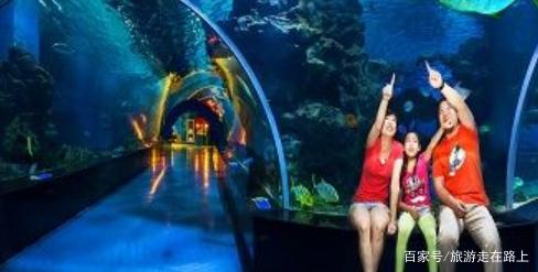 天津海昌极地海洋公园:观赏海洋动物和精彩表演,了解