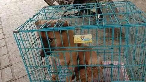 视频曝光!温州市区流浪狗连续咬伤73人,有幼童被袭击,太揪心了
