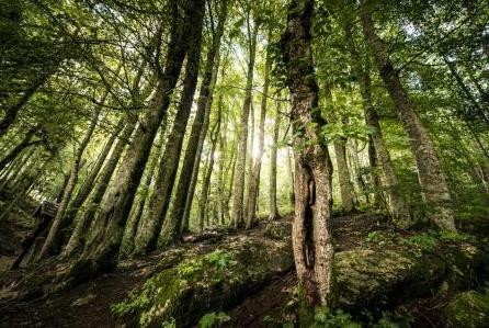 趣味测试:下面哪一片丛林最适合居住?测你最近会不会升职加薪!