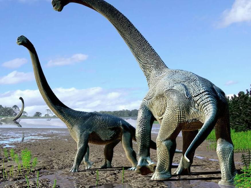 这类恐龙又大又重,最重的达190吨,相当于霸王龙的10倍