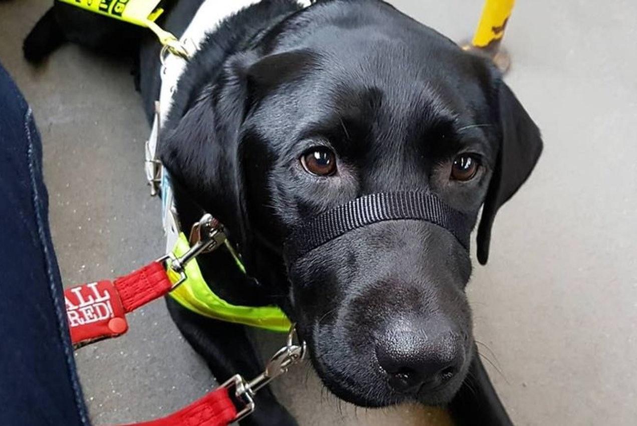 """导盲犬带领盲人乘坐公交遭人谩骂驱赶,网友:谁更需要""""扫盲""""?"""
