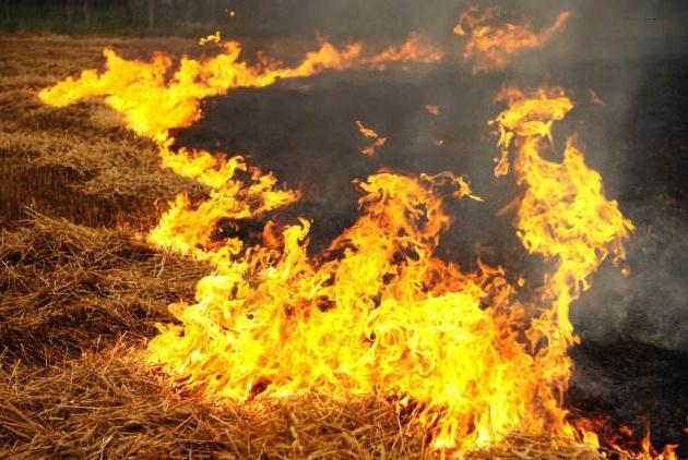 可以焚烧秸秆,空气污染不管了?农民:烧了犯法不烧种不了地