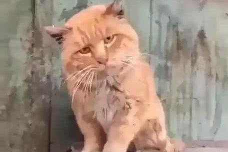 公园里偶遇流浪猫,男子跟猫交谈一会后,猫摇着头走了,猫:幼稚