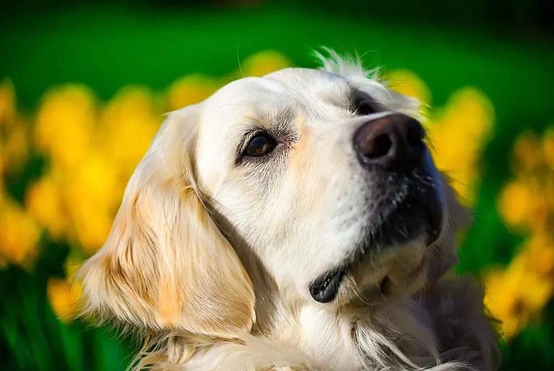 盘点狗狗身体不舒服的五大信号,主人连这都不知道太不称职了