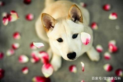 养狗的人都是内心很寂寞的人吗?你是因为什么才养的狗?